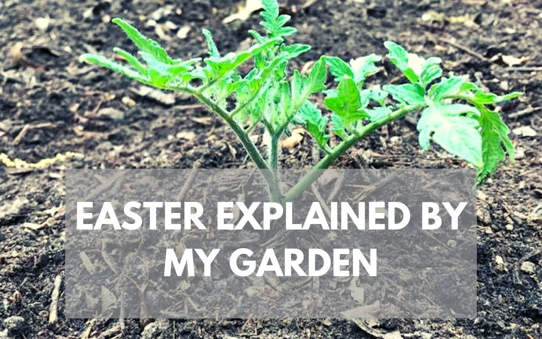 Easter, if Explained by my Garden
